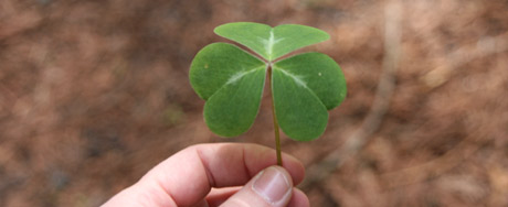 A giant clover. We looked for four leafed clovers, but this was really not the day for those..
