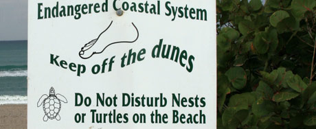 Do not disturb nests or turtles on the beach