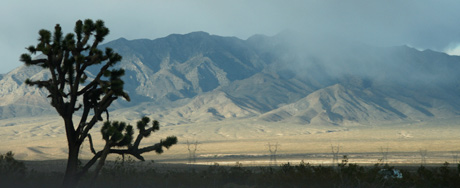A Joshua tree en route to Las Vegas